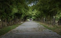 Maneira de bambu imagem de stock royalty free
