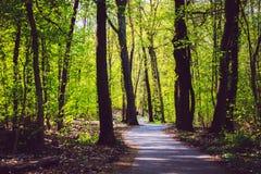 Maneira de estrada da floresta Foto de Stock Royalty Free