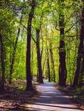 Maneira de estrada da floresta Imagem de Stock