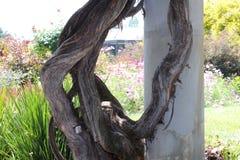 Maneira de madeira Fotos de Stock