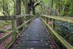 Maneira de madeira da caminhada através das madeiras Foto de Stock Royalty Free