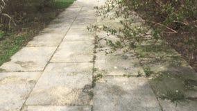 Maneira de passeio do jardim video estoque