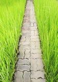 Maneira de pedra na grama verde fotografia de stock royalty free