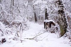 Maneira do inverno, cerca de madeira e vidoeiro fotografia de stock
