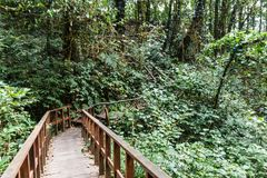 Maneira do trajeto da ponte de madeira com a floresta em Kew Mae Pan Mountain Ridge em Chiang Mai, Tailândia fotos de stock