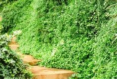 Maneira do trajeto na planta verde da natureza Imagens de Stock