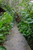 A maneira do verde longo no jardim Foto de Stock Royalty Free