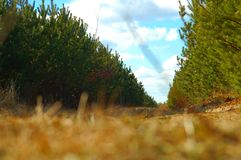 Maneira durante todo árvores fotos de stock