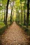 Maneira entre árvores do outono Fotografia de Stock