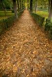 Maneira entre árvores do outono Fotos de Stock Royalty Free