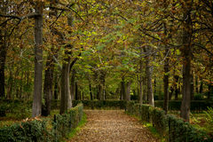 Maneira entre árvores do outono Imagens de Stock Royalty Free