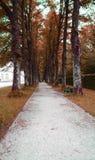 Maneira longa da caminhada na mola Foto de Stock Royalty Free