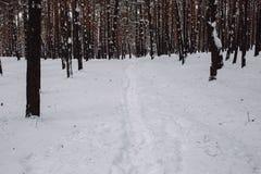 Maneira na floresta coberto de neve Imagem de Stock