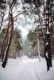 Maneira na floresta coberto de neve Foto de Stock