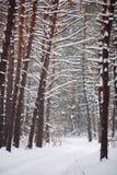 Maneira na floresta coberto de neve Imagens de Stock