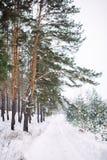 Maneira na floresta coberto de neve Fotografia de Stock