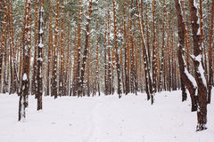 Maneira na floresta coberto de neve Imagem de Stock Royalty Free