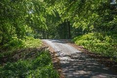 Maneira na floresta do verão em pouco Carpathian Fotos de Stock