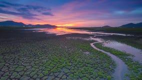 Maneira pequena da água à angra em terra rachada Imagens de Stock
