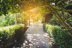 Maneira só da caminhada no verão Fotos de Stock Royalty Free