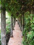 Maneira silenciosa do verde do jardim fotos de stock royalty free