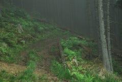 Maneira temperamental através da floresta da montanha na névoa após a chuva Fotos de Stock