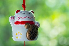 Maneki Neko is Japanese lucky cat doll hanging. On the window with nature background royalty free stock images