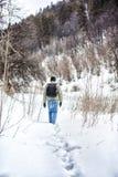 Manen lämnar i vinterskogen Arkivbilder