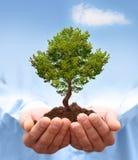 Manen räcker innehav en grön tree. Arkivbilder