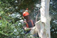 Manen som koncentrerar som trä, gå i flisor flugan Fotografering för Bildbyråer