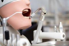 Manequim ou manequim para os estudantes do dentista que treinam em faculdades dentais Foto de Stock