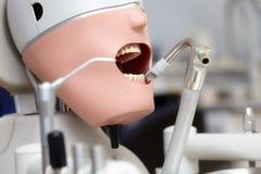 Manequim ou manequim para os estudantes do dentista que treinam em faculdades dentais Foto de Stock Royalty Free