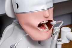 Manequim ou manequim para os estudantes do dentista que treinam em faculdades dentais Imagens de Stock Royalty Free