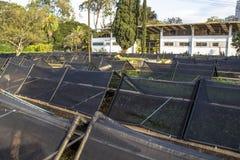 Manequinho Lopes barnkammaren Arkivfoton