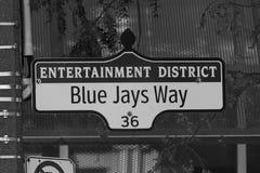 Manera de Blue Jays Foto de archivo libre de regalías