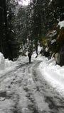 Manera de Himachal a khajjiar Foto de archivo