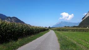 Manera de la bicicleta a lo largo del campo de maíz fotos de archivo libres de regalías
