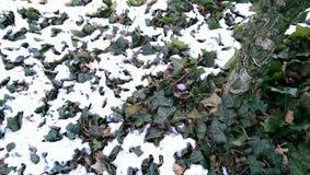 manera de la nieve al castillo de Franzensburg imagen de archivo