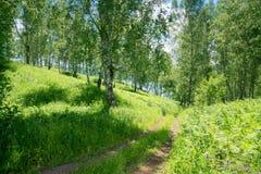 Manera de la trayectoria al lago en bosque del abedul Foto de archivo
