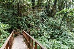 Manera de la trayectoria del puente de madera con el bosque en Kew Mae Pan Mountain Ridge en Chiang Mai, Tailandia fotos de archivo