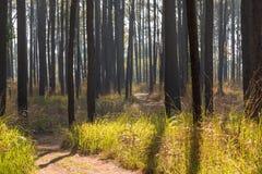 Manera de la trayectoria en el bosque y la luz del sol Imagen de archivo