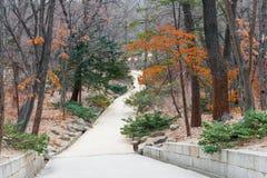 manera de la trayectoria en jardín secreto - palacio o Changdeokgung de Changdeok Fotos de archivo libres de regalías