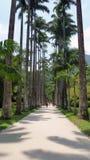 Manera de las palmeras imperiales Foto de archivo