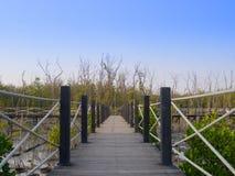 Manera de madera del camino entre el bosque del mangle imagen de archivo