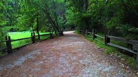 Manera de madera de la escalera en árboles y la calzada verdes del jardín en campo de hierba verde en el parque en la mañana almacen de metraje de vídeo