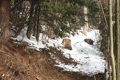 Manera del bosque en invierno Foto de archivo libre de regalías