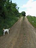 Manera del carril de la granja Fotografía de archivo