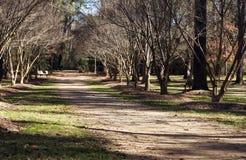 Manera del carril del bosque Imágenes de archivo libres de regalías