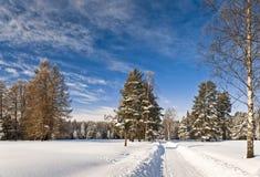Manera del invierno al bosque Fotos de archivo libres de regalías