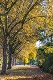 Manera del otoño de la caída de caminar Foto de archivo